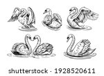 A Sketch Of A Swan. Set Of...