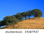 Hilltop With Trees