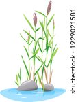 Common Reed Plant Grow Near The ...