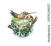 watercolor bird in nest. hand... | Shutterstock . vector #1929134027
