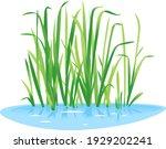 Sweet Flag Plant Grow Near The...