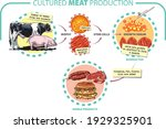 vector illustration. cultured... | Shutterstock .eps vector #1929325901