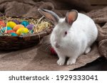 White Bunny With Basket Of...