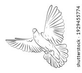 drawn white flying dove on a... | Shutterstock .eps vector #1929455774