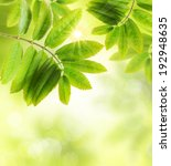 green  leaves background and... | Shutterstock . vector #192948635