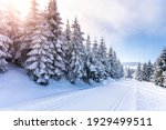 cross country skiing track on... | Shutterstock . vector #1929499511