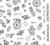 hand draw lemon seamless... | Shutterstock .eps vector #1929547547