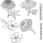 set of flower vector for... | Shutterstock .eps vector #1929558317