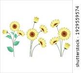 sunflower with its stalks set | Shutterstock .eps vector #1929559574