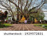Small photo of Khok Pip, Si Mahosot District, Prachin Buri. February 13, 2021. Wat Ton Pho Si Maha Phot, It has the oldest Bodhi tree in Thailand.