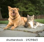 Stock photo dog and cat in the backyard 1929865