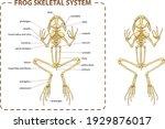 vector illustration of basic... | Shutterstock .eps vector #1929876017
