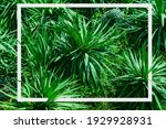 agave plants with white frame...   Shutterstock . vector #1929928931