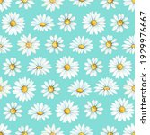 chamomile  a flower drawn by...   Shutterstock . vector #1929976667