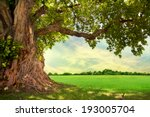 spring meadow with big tree... | Shutterstock . vector #193005704
