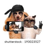 dog with cat taking a selfie...   Shutterstock . vector #193023527
