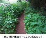 Linden Leaf Weeds And Other...