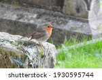 Robin perched on grave headstone