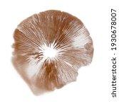 Mushroom Spore Print Isolated...