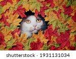 Cute Tabby Cat Looking Through...