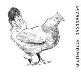 chicken hand drawn illustration.... | Shutterstock .eps vector #1931196254