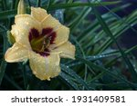 Day Lily Green Decorative Sunny ...