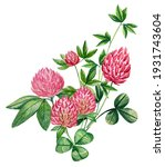 watercolor floral element with... | Shutterstock . vector #1931743604