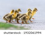 Group Of Cute Little Domestic...