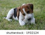 chewing my ball | Shutterstock . vector #1932124