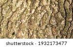 Bark Texture Close Up Of Tree...