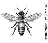 illustration of a honey bee in... | Shutterstock .eps vector #1932245261