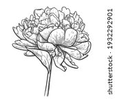 peony flower with leaves... | Shutterstock .eps vector #1932292901