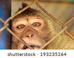 Monkey In A Cage.