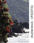 Small photo of Sweet gale or Bog Myrtle (Myrica gale) blossoming in the coast of Azores islands