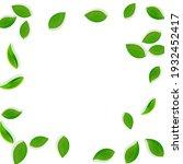 falling green leaves. fresh tea ... | Shutterstock .eps vector #1932452417