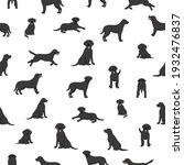 Labrador Retriever Dogs In...