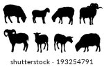 Sheep Silhouettes On The White...