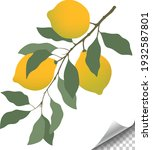 a branch with lemon fruit and...   Shutterstock .eps vector #1932587801