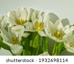 White Tulip Flowers With Green...