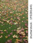 Autumn Leaves In The Grass At...