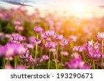 chinese milk vetch | Shutterstock . vector #193290671
