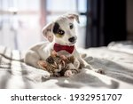 Puppy and kitten hugging on the ...