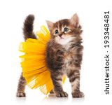 Stock photo cute fluffy kitten posing dressed in the tutu over white background 193348481