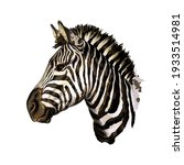 zebra head portrait from a... | Shutterstock .eps vector #1933514981