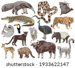 15 colorful hand drawn jungle... | Shutterstock .eps vector #1933622147