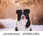 Funny Cute Black And White Dog...