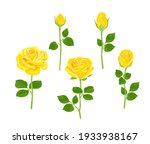 Set Of Yellow Roses Of...