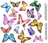 Beautiful Color Butterflies ...
