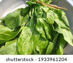 Fresh Green Spinach Leaves In...