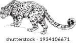 vector snow leopard  irbis wild ...   Shutterstock .eps vector #1934106671